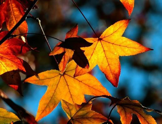 24 - 30 Ekim Haftalık Burç Yorumları