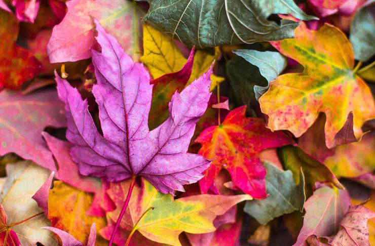 2 - 8 Ekim Haftalık Burç Yorumları-Hande Kazanova
