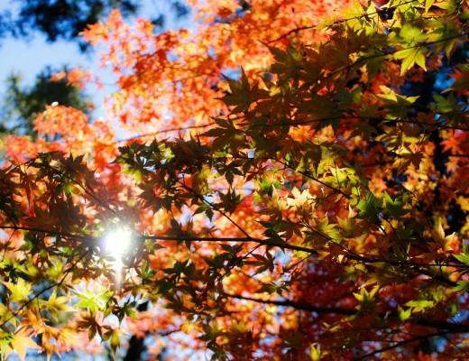 23 - 29 Ekim Haftalık Burç Yorumları-Hande-Kazanova