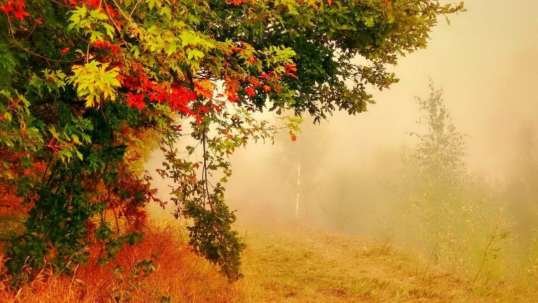 3 - 9 Eylül Haftalık Burç Yorumları- Hande Kazanova