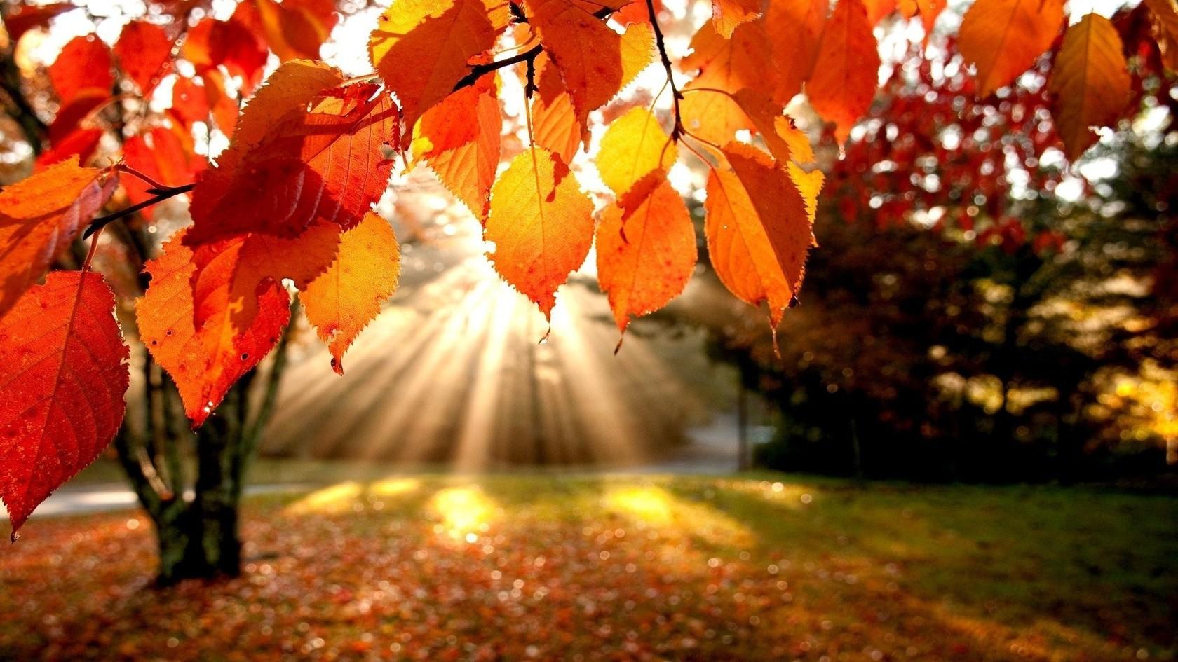 25 Eylül - 1 Ekim Haftalık Burç Yorumları-Hande Kazanova