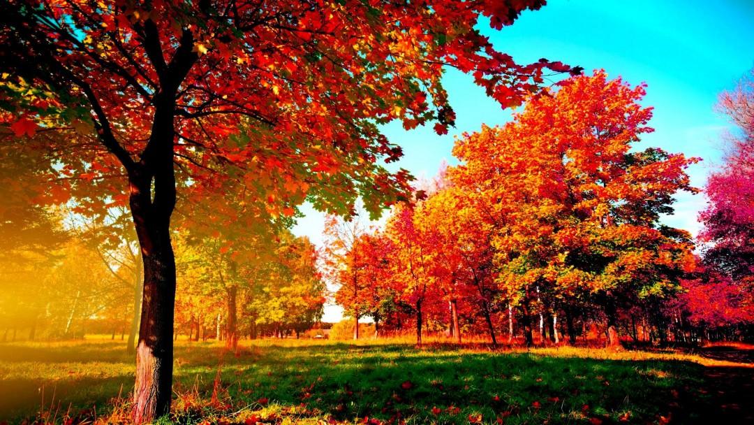 9 - 15 Ekim Haftalık Burç Yorumları-Hande Kazanova