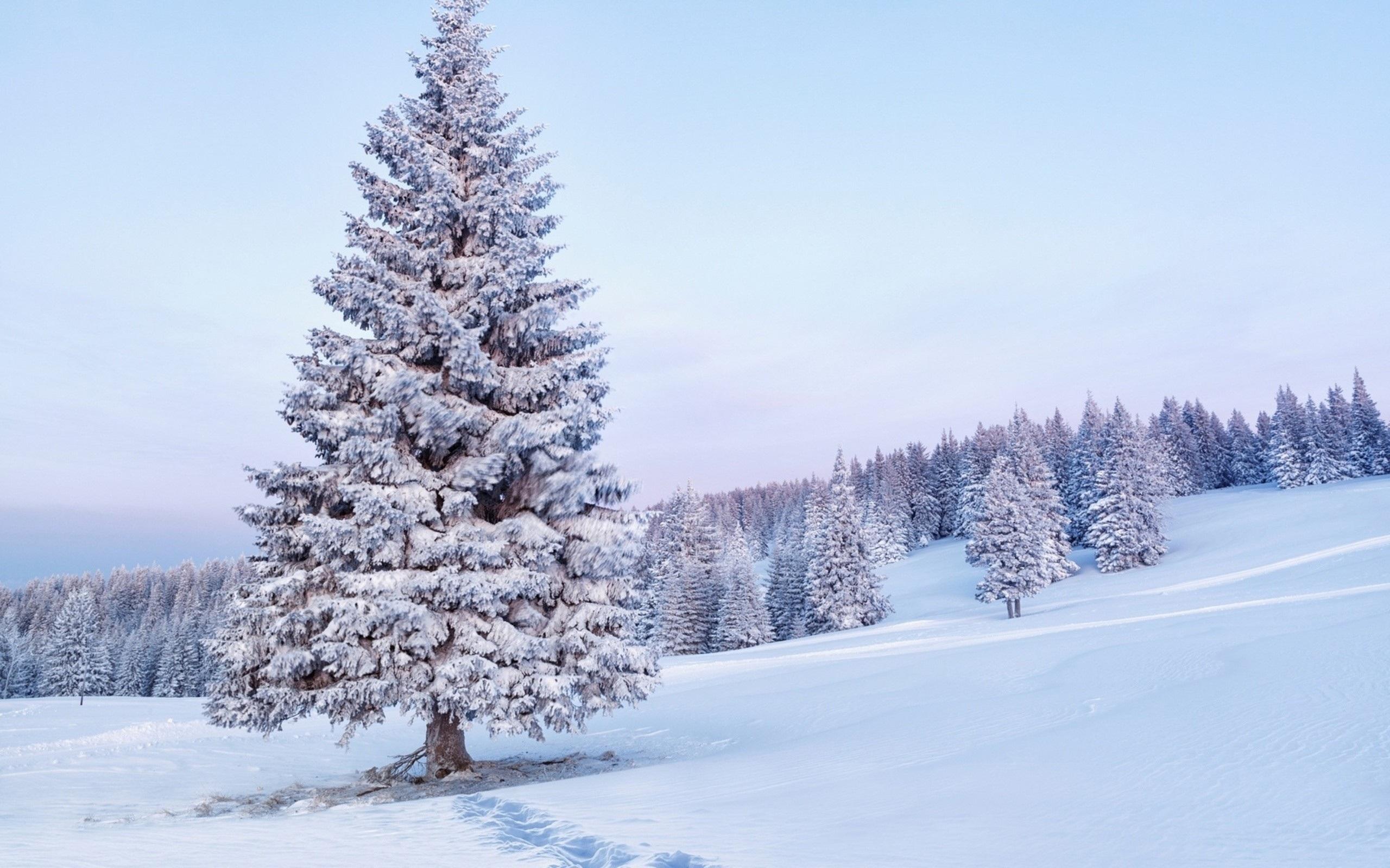 25 - 31 Aralık Haftalık Burç Yorumları