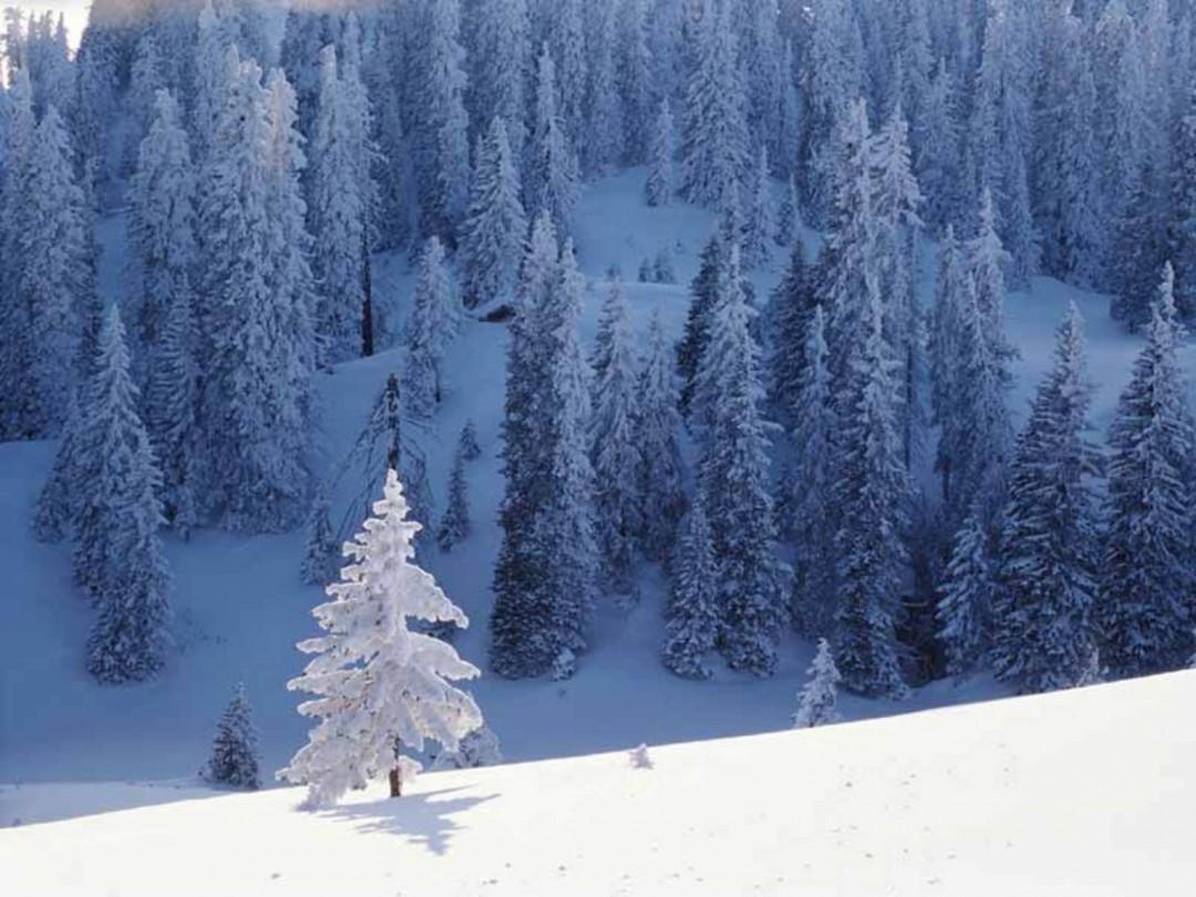 22 - 28 Ocak Haftalık Burç Yorumları - Hande Kazanova
