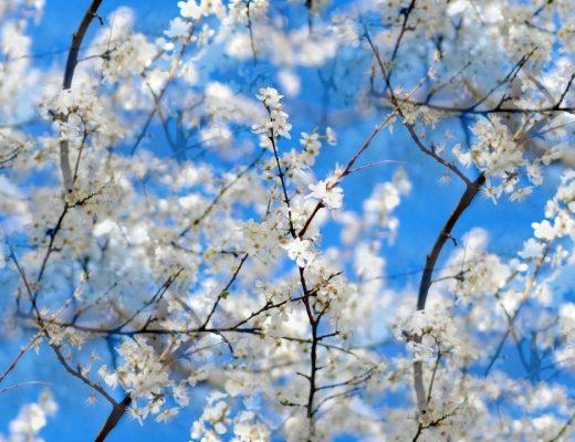 9 - 15 Nisan Haftalık Burç Yorumları - Hande Kazanova