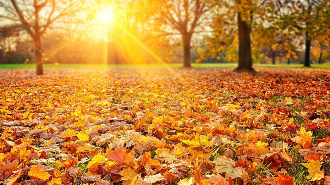 24 - 30 Eylül Haftalık Burç Yorumları - Hande Kazanova
