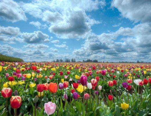 4 - 10 Şubat Haftalık Burç Yorumları - Hande Kazanova