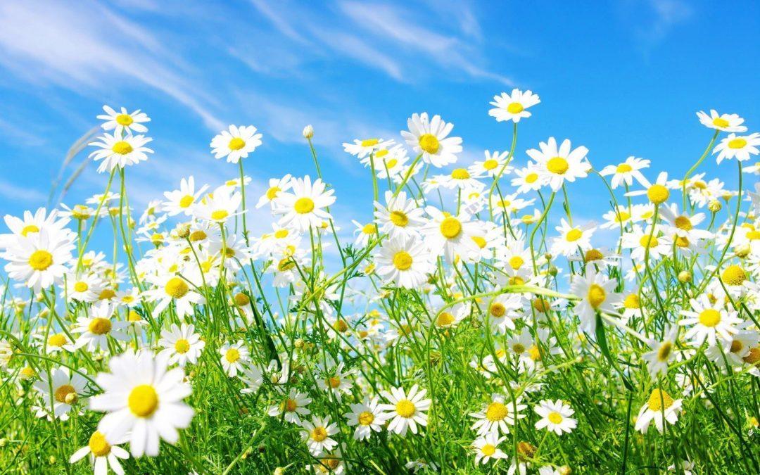 13 - 19 Mayıs Haftalık Burç Yorumları - Hande Kazanova
